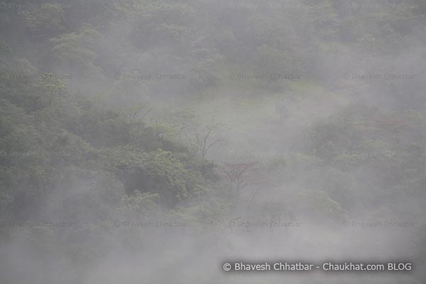 Forest area under the effect of monsoon