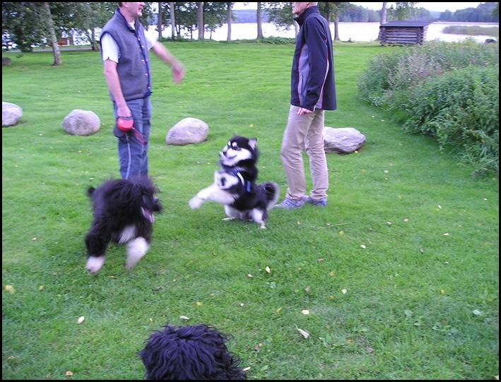 lek med P.vannhund007