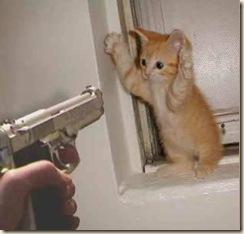 gato asaltado
