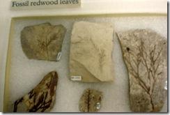 08 fossils