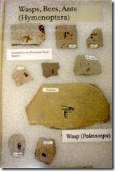 07 fossils