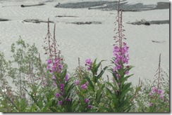 02 Fire Weed, Copper River