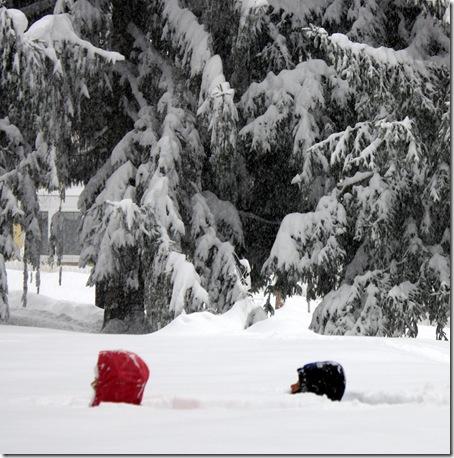 snowheads