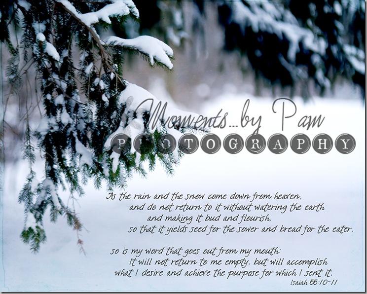 snowy day 023 copy