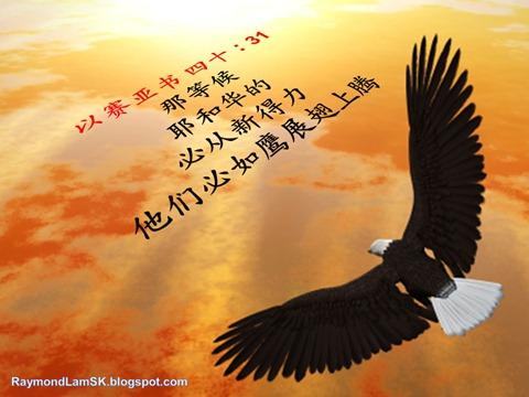 以赛亚书 四十 : 31 那等候耶和华的必从新得力。他们必如鹰展翅上腾