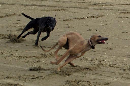 Sarah & Dikkie racen op het strand.
