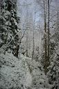 Зимовий ліс під Сивулею