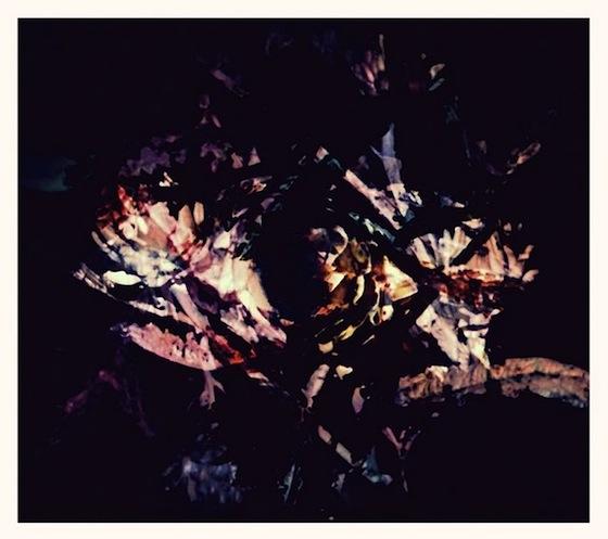 Frdrk flora cover1200 1