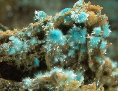 Auricalcita-Aurichalcite