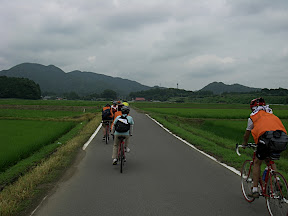 水田の中を通る農道を行くタンデム自転車数台