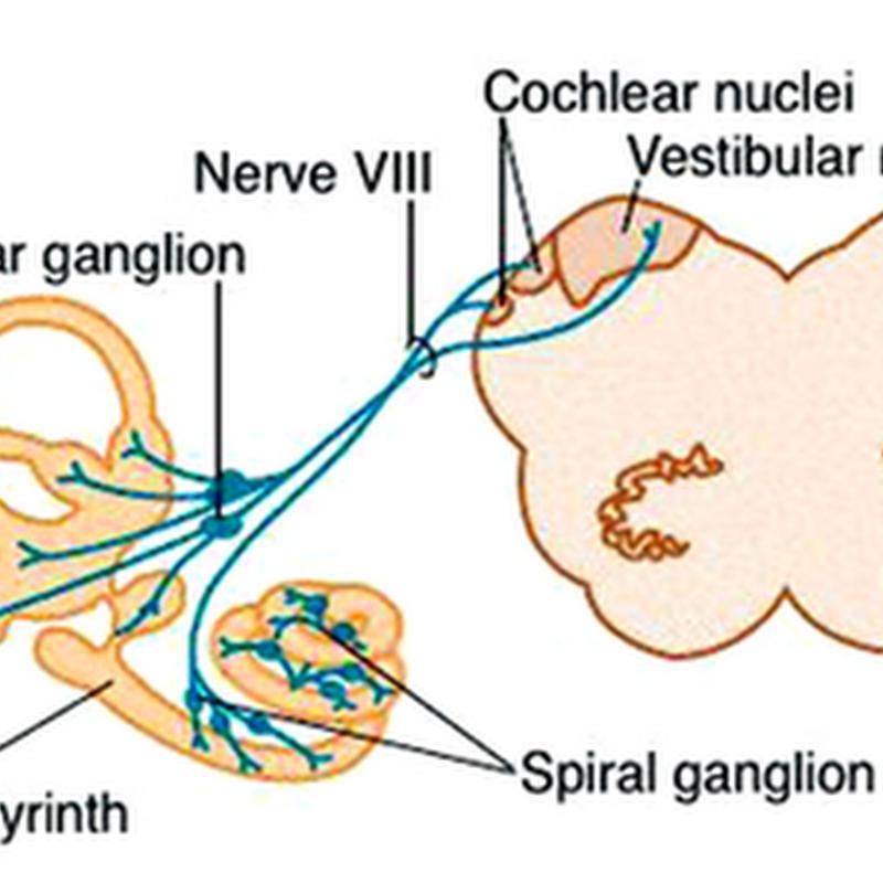 Vestibular cochlear nerve