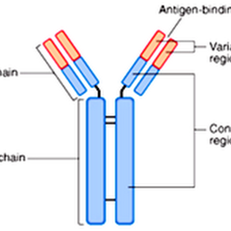 03. Component of HUMORAL IMMUNITY –Anti bodies