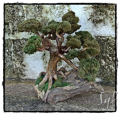 arbre paper 1
