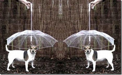 umbrella-for-pets_s9obd_6648