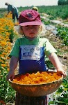Andrew and eric picking calendula.jpg