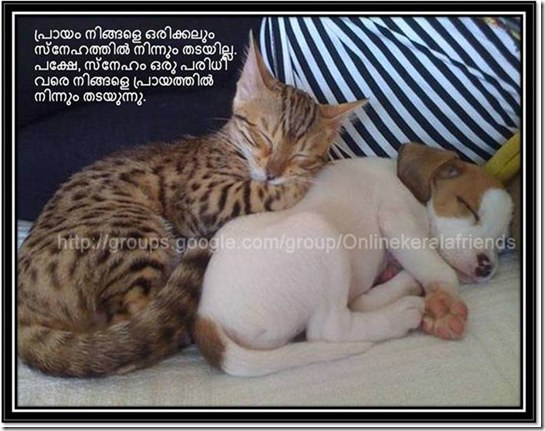 Beautiful Friendship Quotes in Malayalam