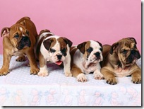 Dogs-wallpapers (164)