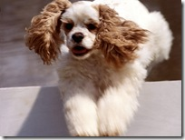 Dogs-wallpapers (153)