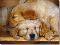 Dogs-wallpapers (151)