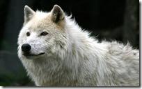 animal wallpapers (8)