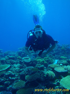 Scuba Diver on a Coral Seascape