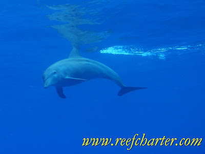 Diving with Dolphins, Cairns Australia