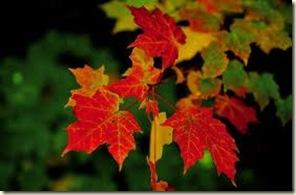 fall leave 3