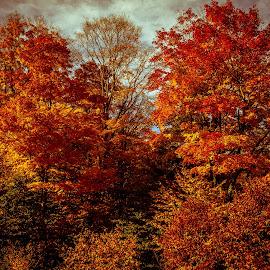 Fall by Gabriel Lungu - Landscapes Forests