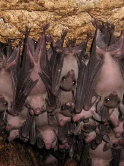 Onde os morcegos moram