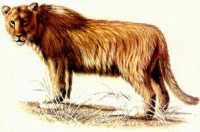 Leão das cavernas (extinto 2.000 anos atrás)