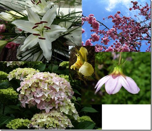 flowers-1-main