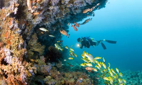 Ocean acidification will endanger the algae that hold together this reef in the Maldives. Photograph: Michele Westmorland / Getty Images