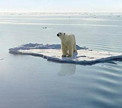 Polar bear occupies the only ice floe for miles in a warming Arctic Ocean. (Photo by Francis Lai)