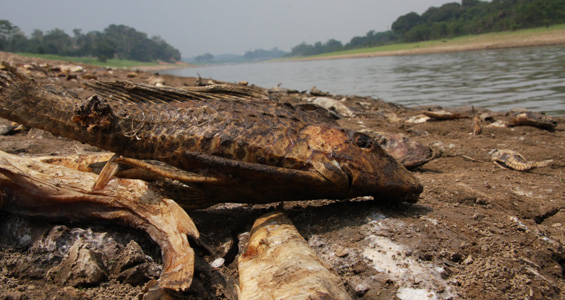 Thousands of fish in the river have been killed by a sharp drop in water oxygen levels (ELIZONDO)