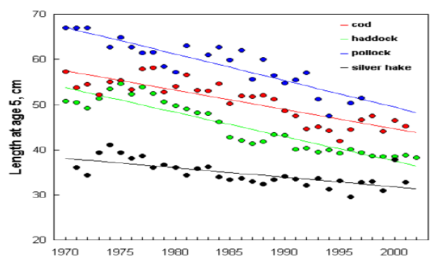 Length of five years of age for Atlantic cod, haddock, pollock, and silver hake. Regression lines are shown (all significant at p < 0.01). 2010 Canadian Marine Ecosystem Status and Trends Report