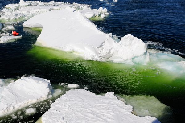 The emerald green waters of a polynya algae bloom in Antarctic sea ice. David Munroe, USAP / nationalgeographic.com