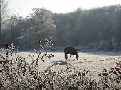 Muxton Marsh Nov, Dec 2010 063