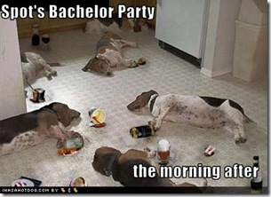 funny-dog-pictures-bachelor-party