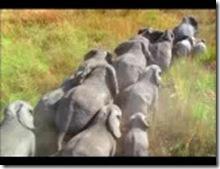 elephants.3