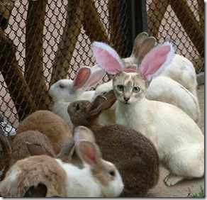easter-bunny-cat