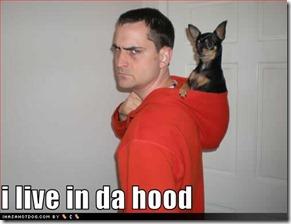 funny-dog-pictures-da-hood