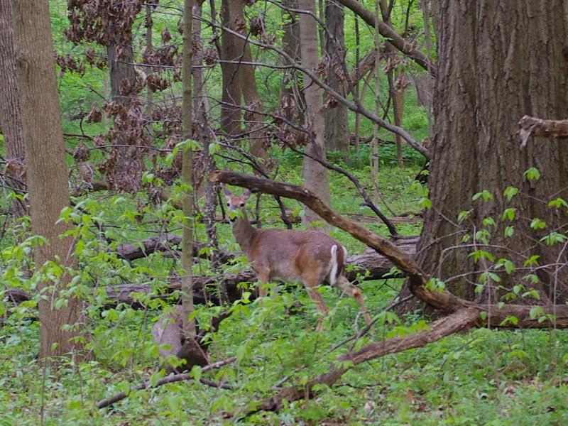 伊利諾州的小森林(Busey Wood)
