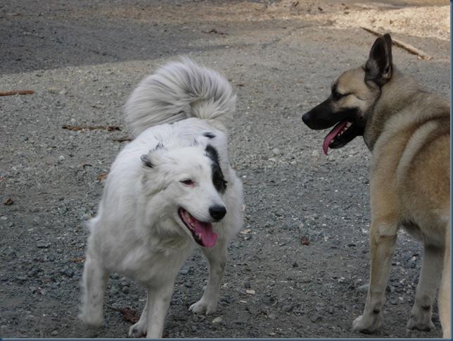 Kango og Vendela 001