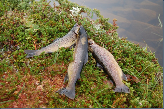 fisketur07 007