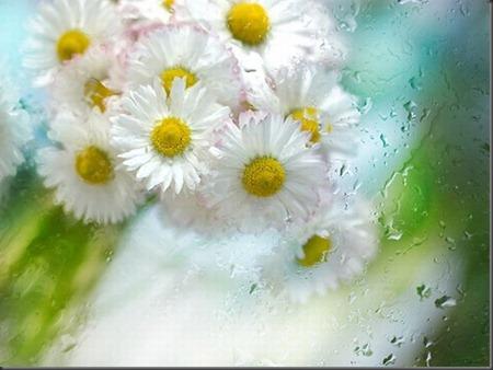 Lindas imagens de flores (31)[2]