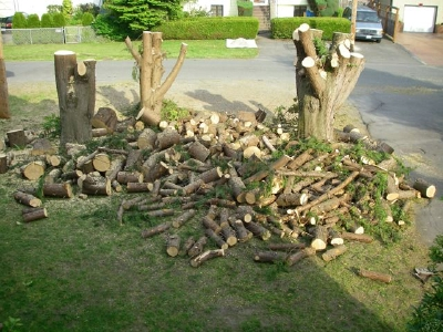 lots-of-stumps.jpg