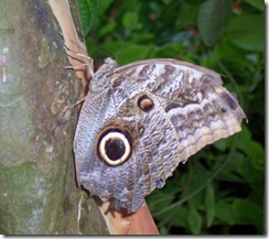 moth2_bw