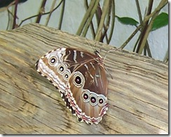 moth4_bw