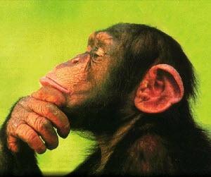 monkey-expert
