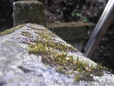 Haruna Shrine 02